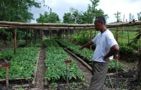 Mann zeigt Garten auf Beet
