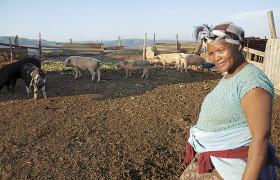 Südafrikanerin mit Hausschweinen