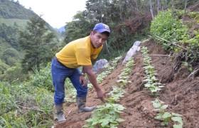 Mann in seinem Garten, Projekte