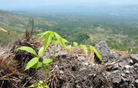 Haiti, Piod