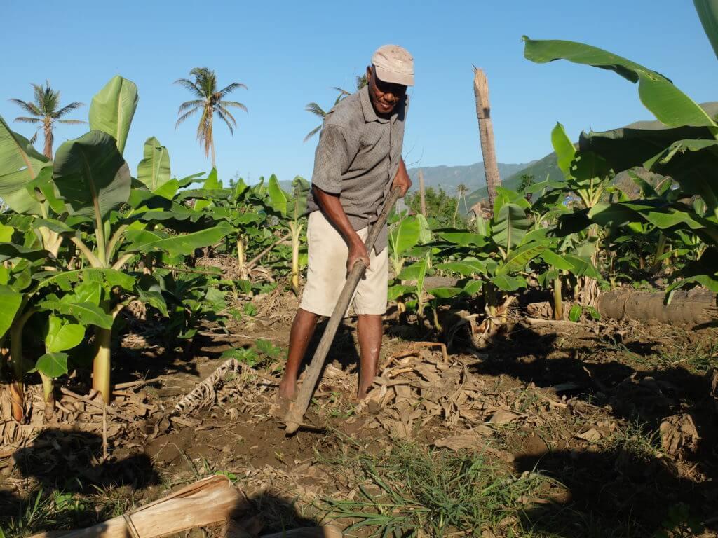 Ein Bauer richtet in Chardonnière seinen Garten wieder her. Die Bäume wurden arg beschädigt oder sind wegen des Windes umgefallen, und die gesamten Kulturen wurden verwüstet. Auch die Bananenstauden wurden zerstört, allerdings bilden diese aus den Wurzeln neue Sprosse.