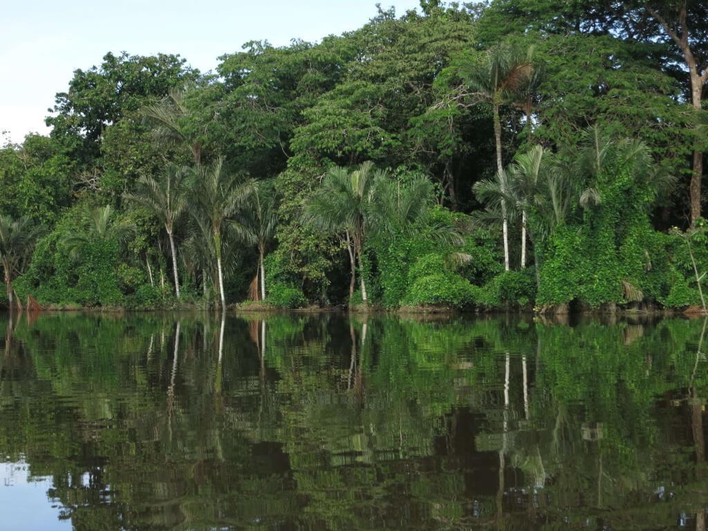 ...vom Sammeln und Verarbeiten von Pará-Nüssen,