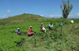 Haiti UPTKMA und KOPBB