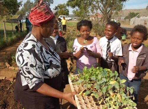 Gesunde Menschen in Südafrika dank ökologischem Garten- und Heilpflanzenanbau, sowie Ernährungsberatung und Hygiene.