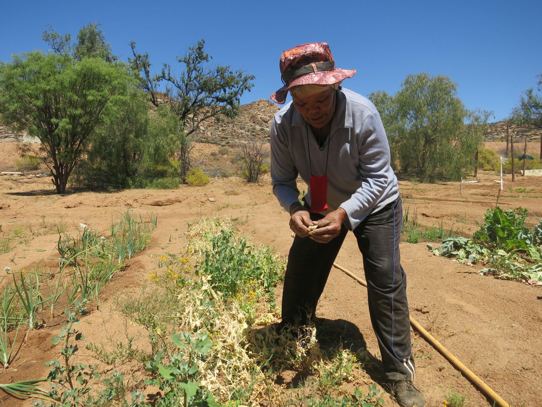 Betagte Gärtnerin im Namaqualand