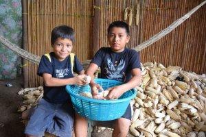 Saatgut gehört in Bauernhände. Zwei Buben in Guatamala bearbeiten den getrockneten Mais.