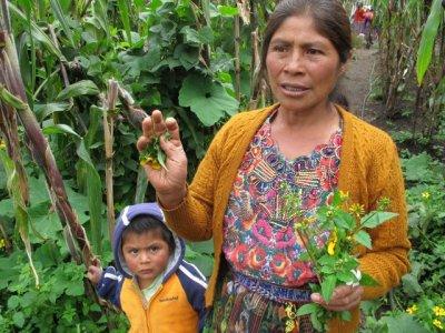 Eine Kleinbäuerin im Projekt AMMID in Guatamala zeigt ihre Ernte. Foto von Tina Goethe