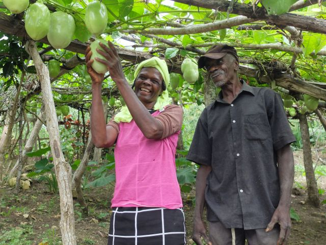 Haiti CONCERTACTION, Sie fördern Schulungen in nachhaltiger Landwirtschaft mit Fruchtbäumen zwischen Gemüsegärten. Sie sichern so Einkommen und Ernährung von Familien.