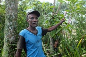 Haiti ODTPKA, Baumschulen, Sie ermöglichen die Aufzucht von Setzlingen für die Wiederaufforstung. Die Bäume speichern Wasser bei heftigen Regenfällen uns schützen vor Überschwemmungen.