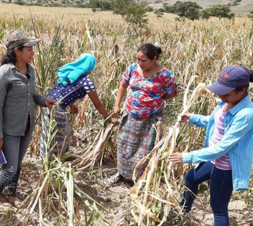 CARITAS VERAPAZ, Frauen auf dem Feld
