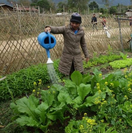 ACD, Frau tränkt ihren Gemüsegarten