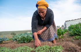 Suedafrika RWA, IP Ernährungsgerechtigkeit