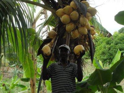 Haiti GRADAID