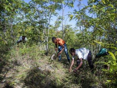 Haiti PIOD
